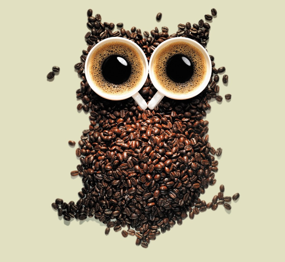 26020-coffee-owl-bean-beans-owls-drink-drinks